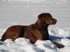 Februar 2011: Schneeimpressionen