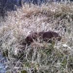 brown meets deadgrass