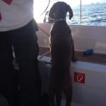 Skipper Ally